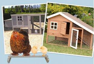 Get Clucky: Chicken Coops