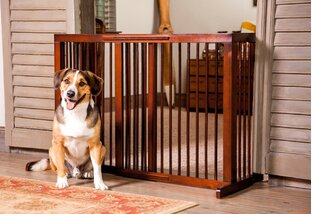 Pet Enclosures for Every Space