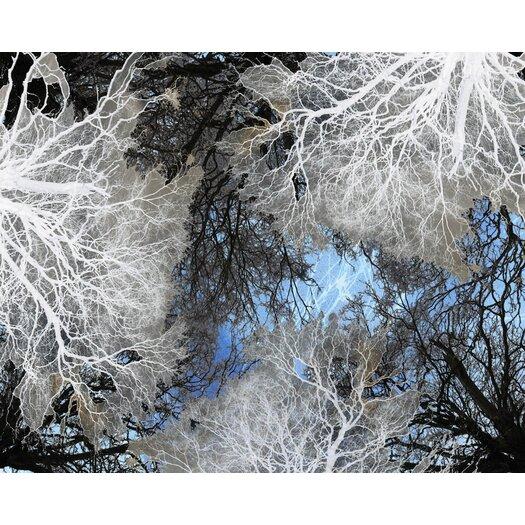 JORDAN CARLYLE Nature Beyond Forest Framed Graphic Art