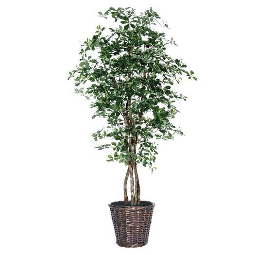Vickerman Co. Blue Ridge Fir Executive Olive Tree in Basket