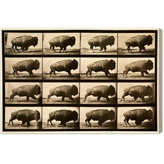 Buffalo in Motion Photographic Print on Canvas