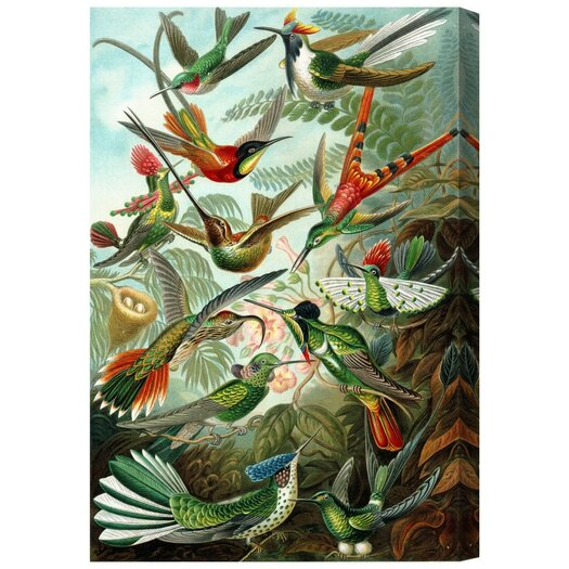 Haeckel - Bird Study Painting Print on Wrapped Canvas