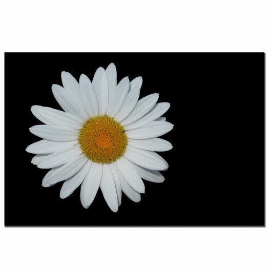 Trademark Fine Art 'Daisy on Black' by Kurt Shaffer Photographic Print on Canvas
