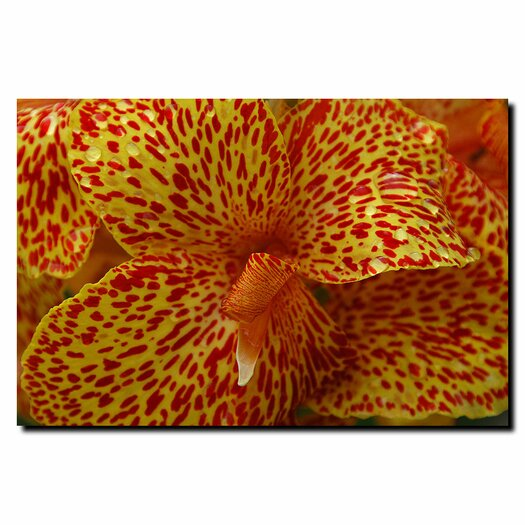 Trademark Fine Art 'Cosmic Canna' by Kurt Shaffer Photographic Print on Canvas