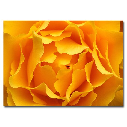 Trademark Fine Art Hypnotic Yellow Rose Photographic Print on Canvas by Kurt Shaffer