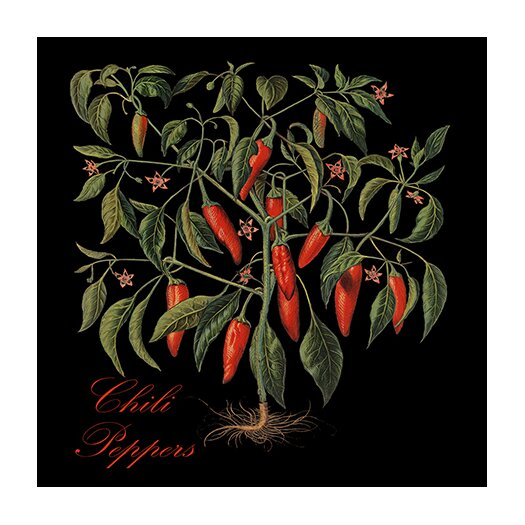 "iCanvas ""Chili Peppers"" Canvas Wall Art by Mindy Sommers"