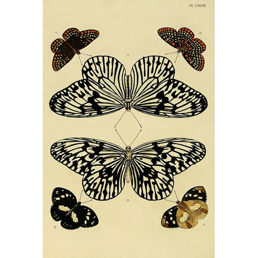 iCanvas 'Plate 193' by Cramer and Stoll Graphic Art on Canvas