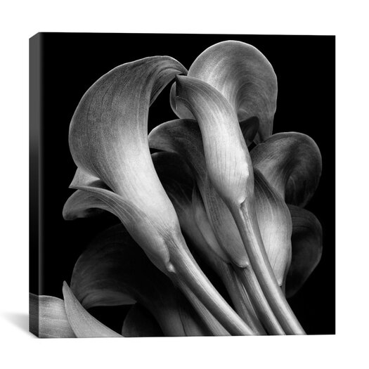 "iCanvas ""Lillies"" Canvas Wall Art by Michael Harrison"