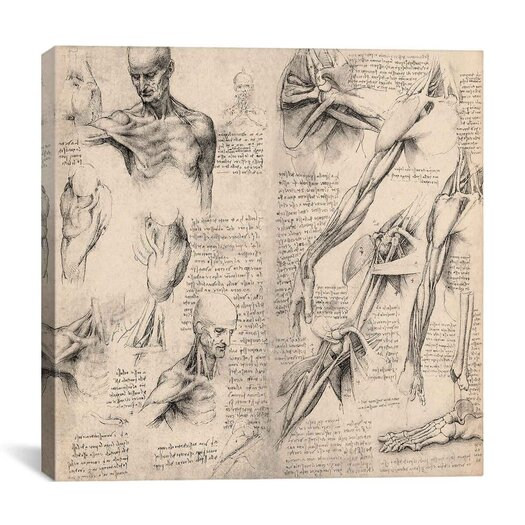 "iCanvas ""Sketchbook Studies of Human Body Collage"" Canvas Wall Art by Leonardo da Vinci"