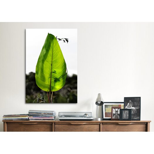 """iCanvas """"Single Leaf Beauty' by Harold Silverman - Foilage and Greenery Photographic Print on Canvas"""