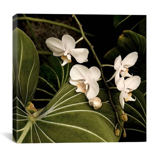 "iCanvas ""White Orchid on Leaves - Flowers"" Canvas Wall Art by Harold Silverman"