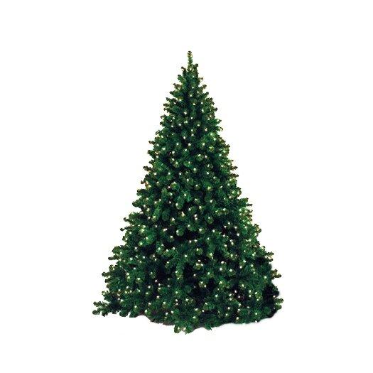Queens of Christmas 12' Classic Sequoia Pre Lit Tree