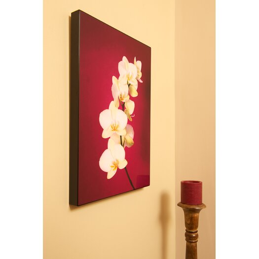 Graham & Brown Graham & Brown Fucshia Orchid Lacquer Photographic Print