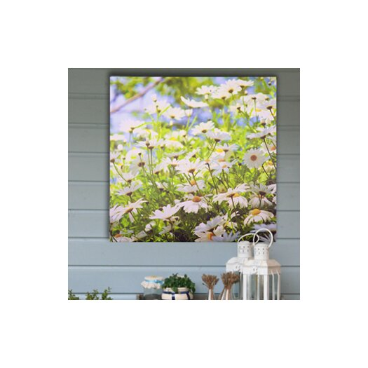 Graham & Brown Graham and Brown Daisy Meadow Outdoor Photographic Print on Canvas