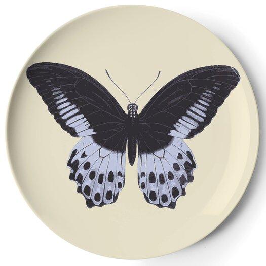 Thomas Paul Metamorphosis Coaster