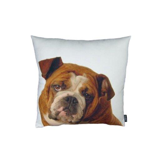 lava English Bulldog Pillow
