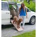 "<strong>Pet Gear</strong> Indoor Bi-Fold Half 42"" Pet Ramp"