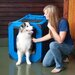 Generation II Deluxe Portable Soft Medium Pet Crate