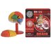 <strong>Brain Box Kit</strong> by Tedco Toys