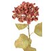 <strong>Distinctive Designs</strong> DIY Flower Artificial Everlasting Hydrangea (Set of 12)