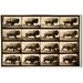 Oliver Gal Buffalo in Motion Photographic Print on Canvas