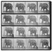 Oliver Gal Elephant in Motion Photographic Print on Canvas