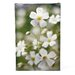 <strong>'Baby's Breath III' by Kurt Shaffer Photographic Print on Canvas</strong> by Trademark Fine Art