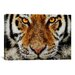 iCanvasArt Animal Art - Tiger by Maximilian San Graphic Art on Canvas