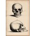 <strong>Cartography 'Human Skull Engraving' by William Miller Graphic Art o...</strong> by iCanvasArt