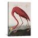 iCanvasArt 'Flamingo Drinking at Water's Edge' by John James Audubon Painting Print on Canvas