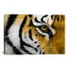 <strong>iCanvasArt</strong> Eye of the Tiger by Lucie Bilodeau Photographic Print on Canvas