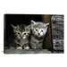 <strong>Kittens Photographic Print on Canvas</strong> by iCanvasArt