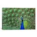 iCanvasArt Photography Peacock Feathers Graphic Art on Canvas