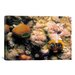 iCanvasArt Marine and Ocean 'Spiral Coral' Photographic Print on Canvas