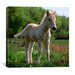 """iCanvasArt """"White Pony"""" Canvas Wall Art by Carl Rosen"""