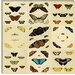 """Butterflies 9 Piece Plate Collection IV"" Canvas Wall Art by Cramer and Stoll"