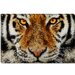 """Animal Art - Tiger"" Canvas Wall Art by Maximilian San"