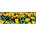 Yellow Tulips in a Field Canvas Wall Art