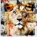 """Lion"" Canvas Wall Art by Luz Graphics"