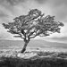 <strong>Standing Alone Photographic Print on Canvas</strong> by Epic Art