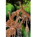 """<strong>""""Group of Giraffe"""" Painting Prints on Canvas</strong> by Maxwell Dickson"""