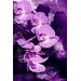 """<strong>Maxwell Dickson</strong> """"Purple Orchid"""" Painting Prints on Canvas"""
