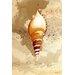 Maxwell Dickson Seashell Graphic Art on Canvas