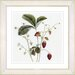 <strong>Vintage Botanical No. 06W by Zhee Singer Framed Giclee Print Fine W...</strong> by Studio Works Modern