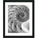 """Cambrian Sea Shell"" Framed Fine Art Giclee Print"