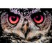 "<strong>Salty & Sweet</strong> ""Night Owl"" Graphic Art on Canvas"