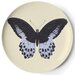 <strong>Metamorphosis Coaster (Set of 4)</strong> by Thomas Paul