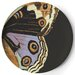 "<strong>Metamorphosis 11"" Dinner Plate (Set of 4)</strong> by Thomas Paul"