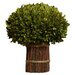 <strong>Preserved Boxwoods Preserved Greens Willow Stand Desk Top Plant</strong> by Napa Home and Garden