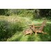 <strong>Adirondack Chair</strong> by Jewels of Java